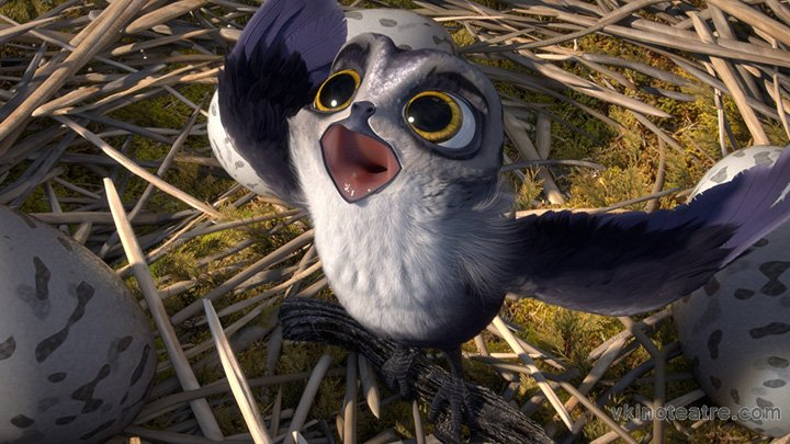 фото №2 из Птичий дозор